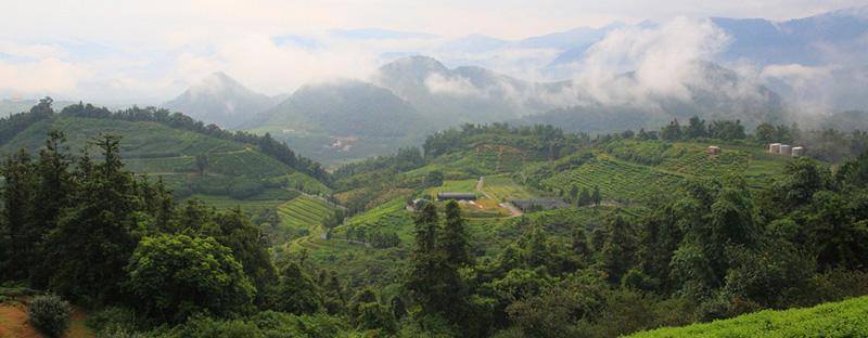 Teegarten in Formosa