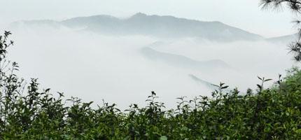 Nebel in den Teefeldern von Yunnan