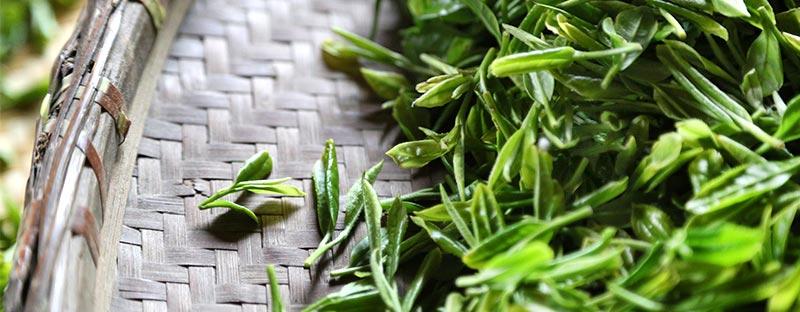Hochwertiger Weißer Tee vom Teeversand tea exclusive